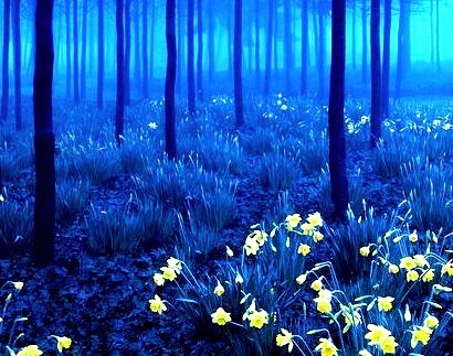 Yellow and Blue, Black Forest, Germany