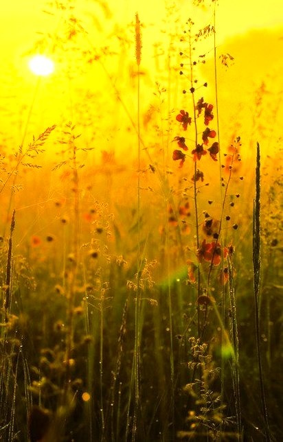 Wildflower Sunset, Burgundy, France