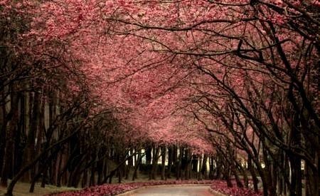 Burgundy Lane, Madrid, Spain