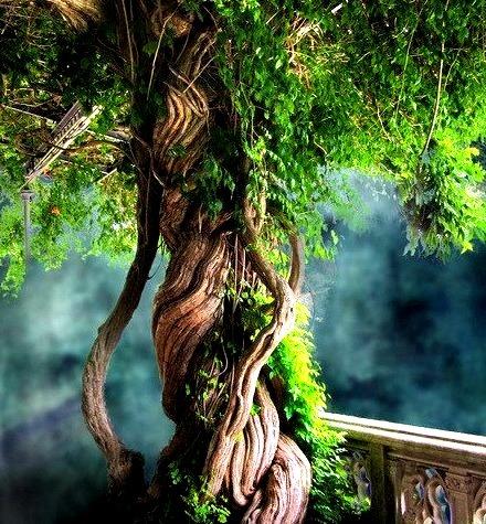 Vine Tree, Louisville, Kentucky