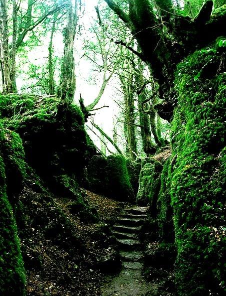 Puzzlewood Forest, Gloucestershire, England